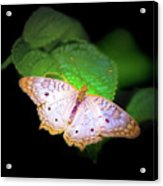 White Peacock Butterfly Wonderland A Series  Acrylic Print