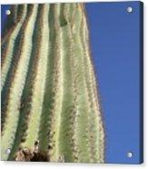 Cactus IIi Acrylic Print