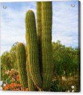 Cactus Monterey California Acrylic Print