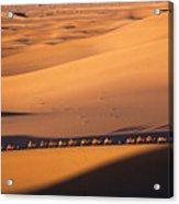 Camel Caravan Crosses The Dunes Acrylic Print