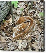 Camouflaged Fawn Acrylic Print