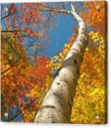 Canadian Autumn Acrylic Print