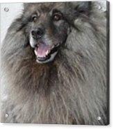 Canine Beauty Acrylic Print