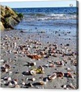 Cape Cod Beach Finds Acrylic Print