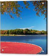 Cape Cod Cranberry Bog Acrylic Print