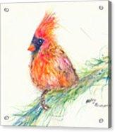 Cardinal On Branch Acrylic Print