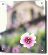Carmel Mission With Flowers Acrylic Print