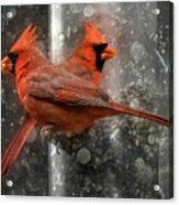 Cary Carolina Cardinals  Acrylic Print