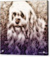 Cassie Girl Acrylic Print
