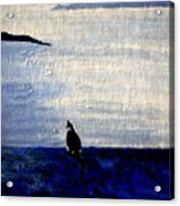 Cat By The Seaside Acrylic Print
