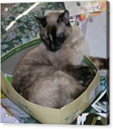 Cat In A Box Acrylic Print