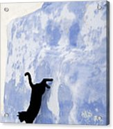 Cat Jumping From A Wall Acrylic Print