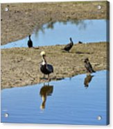 Center Of Attraction Acrylic Print