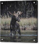 Chasing Tail Acrylic Print