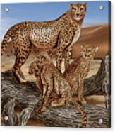 Cheetah Family Tree Acrylic Print
