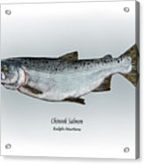 Chinook Salmon Acrylic Print by Ralph Martens