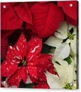 Christmas Cheer Acrylic Print