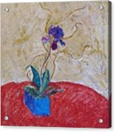 Christmas Orchid Acrylic Print