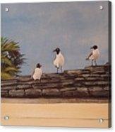 Cinco Seagulls Acrylic Print