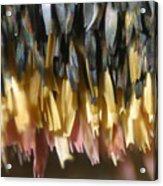Close-up Of Luna Moth Wing Acrylic Print