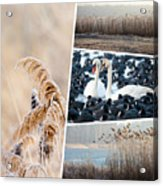 Collage Of Winter Grass Acrylic Print