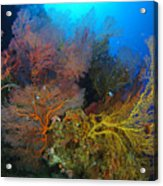 Colorful Assorted Sea Fans And Soft Acrylic Print