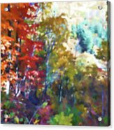 Colorful Autumn Trees In Forest Acrylic Print