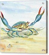 Colorful Blue Crab Acrylic Print