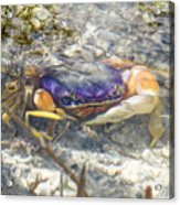 Colorful Crabstract 2 Acrylic Print