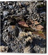 Colorful Lichens Growing On Rocks Along Monument Ridge, In The Eastern Sierra Nevadas Acrylic Print
