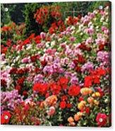 Colorful Spring Rose Garden Acrylic Print