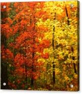 Colors Of Autumn II Acrylic Print
