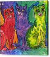 Colourful Cats Acrylic Print