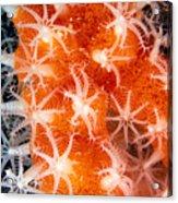 Coral, Close-up Acrylic Print