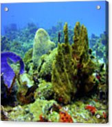 Coral Head Acrylic Print