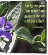 1 Corinthians 15 Vs 10 Lavender Blossom Acrylic Print