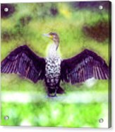 Cormorant Dries Its Wings Acrylic Print