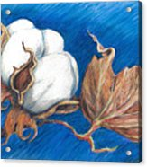 Cotton Picking Blues Acrylic Print