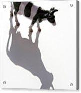Cow Figurine Acrylic Print