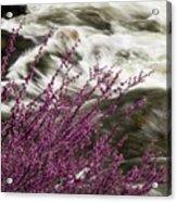 Cranberry Gulch Acrylic Print