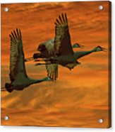 Cranes At Sunrise Acrylic Print by Larry Linton