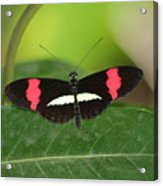 Crimson Patched Longwing Acrylic Print