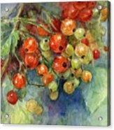 Currants Berries Painting Acrylic Print by Svetlana Novikova