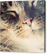 Cute Small Cat Portrait Acrylic Print