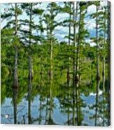 Cypress Grove Acrylic Print