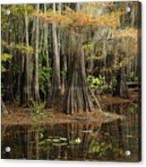 Cypress Trees In Caddo Lake Acrylic Print