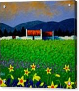 Daffodil Meadow Acrylic Print