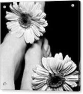 Daisy Toes Acrylic Print