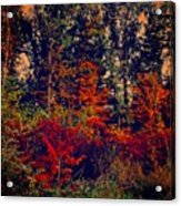 Day In The Woods  Acrylic Print