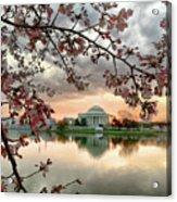 Dc Cherry Blossoms Acrylic Print